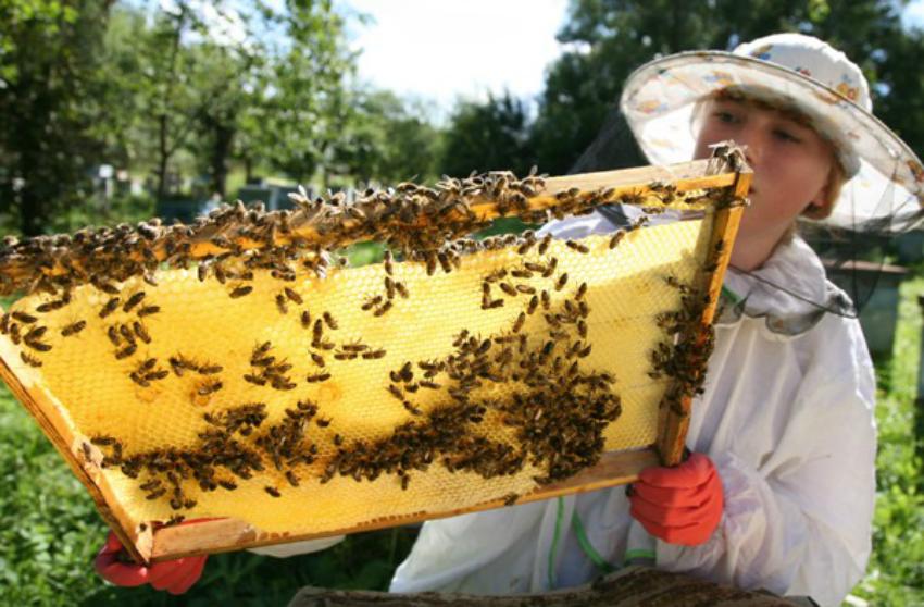Пчеловодство - РГАТУ