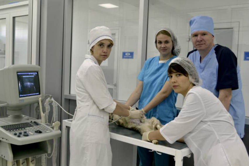 Факультет ветеринарной медицины и ветеринарно-санитарной экспертизы